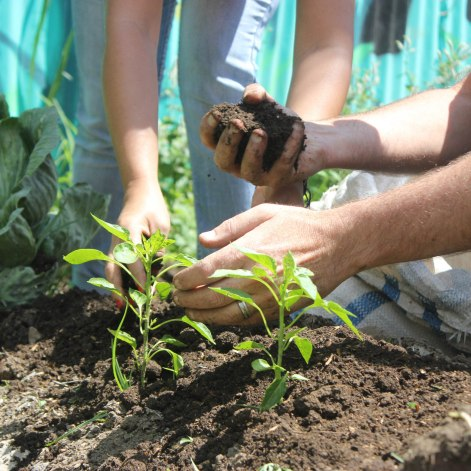 Produce is planted in one of AgroArte's community gardens in Comuna 13.